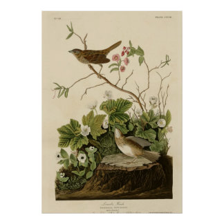Lincoln Finch Poster