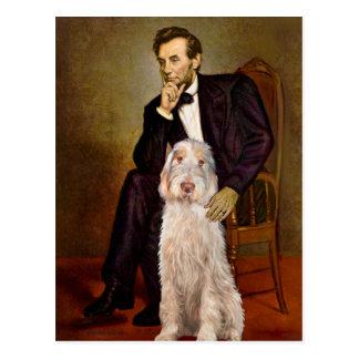 Lincoln - Spinone Italiano 12 Postcard