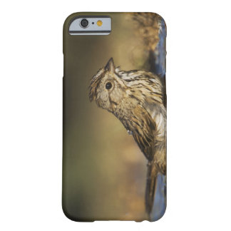 Lincoln's Sparrow, Melospiza lincolnii, adult Barely There iPhone 6 Case