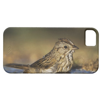 Lincoln's Sparrow, Melospiza lincolnii, adult Case For The iPhone 5