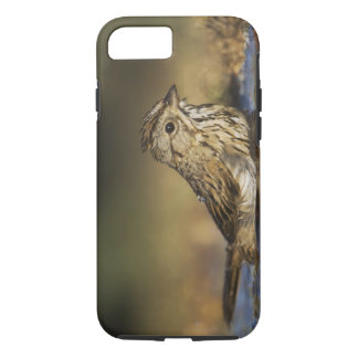 Lincoln's Sparrow, Melospiza lincolnii, adult iPhone 8/7 Case