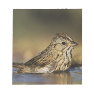 Lincoln's Sparrow, Melospiza lincolnii, adult Notepad