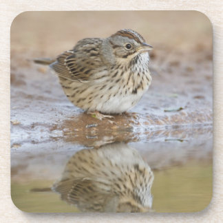 Lincoln's Sparrow reflected in ranch pond Coasters