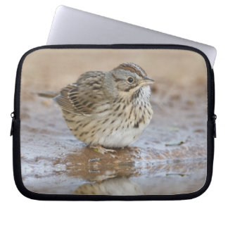 Lincoln's Sparrow reflected in ranch pond Laptop Sleeve