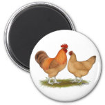 Lincolnshire Buff Chickens 6 Cm Round Magnet