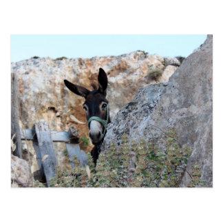 Lindos Donkey Postcard