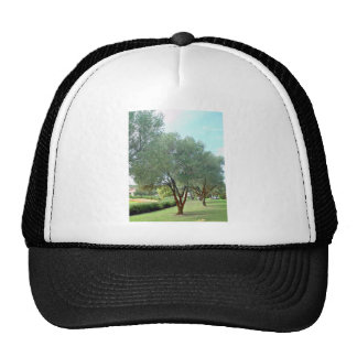 Lined Olive grove trees against blue sky Hat