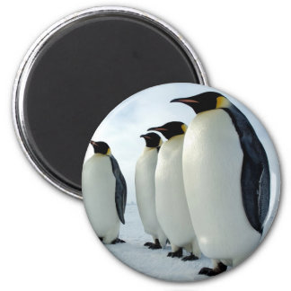 Lined up Emperor Penguins 6 Cm Round Magnet