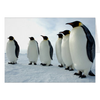 Lined up Emperor Penguins Card