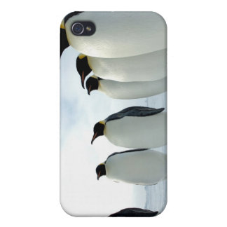 Lined up Emperor Penguins iPhone 4 Cover