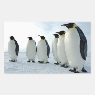 Lined up Emperor Penguins Rectangular Sticker