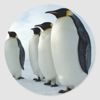 Lined up Emperor Penguins Round Sticker