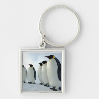 Lined up Emperor Penguins Silver-Colored Square Key Ring