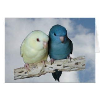Lineolated parakeet pair cards