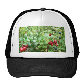 Lingonberries In Bush Hat