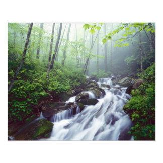 Linn Cove Creek cascading through foggy Photo Print