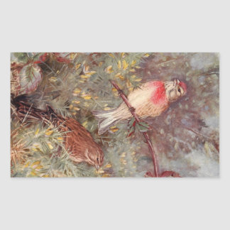 Linnent Birds Vintage Illustration Rectangle Sticker