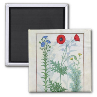 Linum, Garden poppies and Abrotanum Magnet