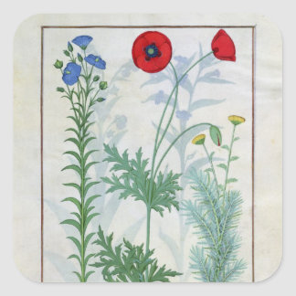 Linum, Garden poppies and Abrotanum Square Sticker