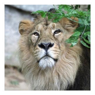 Lion20150605 Photo Art