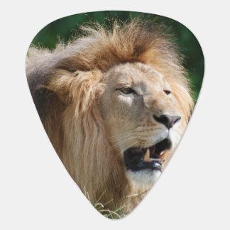 lion-112 pick