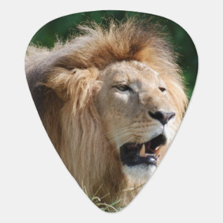 lion-112 plectrum