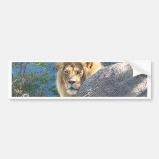 Lion 2 bumper sticker