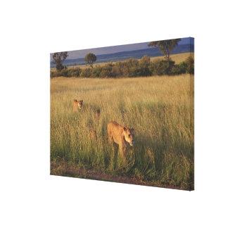 Lion 2 canvas print
