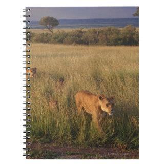Lion 2 notebook
