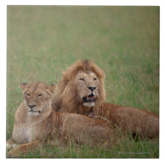 Lion 2 tile