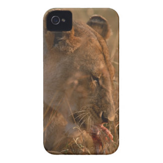 Lion 3 iPhone 4 Case-Mate cases