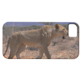 Lion 3 iPhone 5 covers