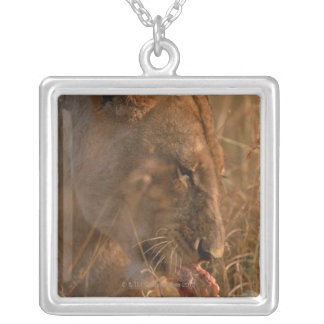 Lion 3 silver plated necklace
