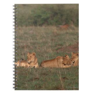 Lion 4 notebook