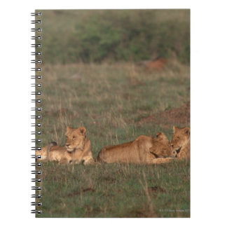 Lion 4 spiral notebook