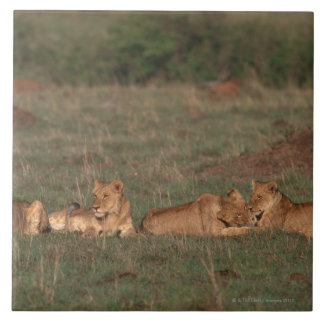 Lion 4 tile