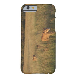 Lion 6 barely there iPhone 6 case