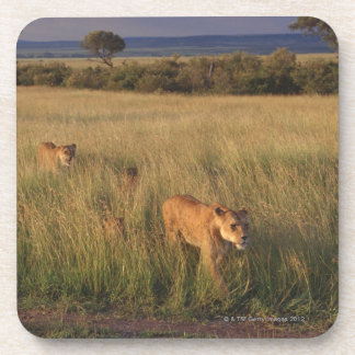 Lion 6 drink coasters