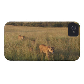 Lion 6 iPhone 4 cases