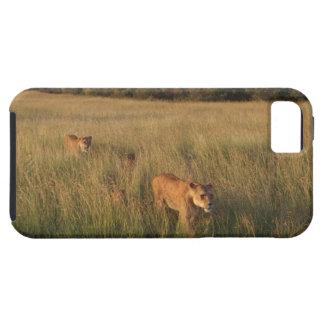 Lion 6 iPhone 5 case