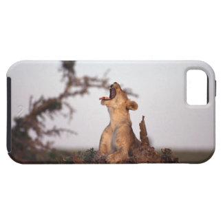 Lion 7 iPhone 5 case