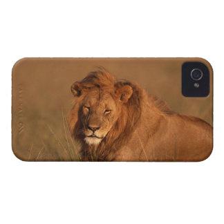 Lion 8 Case-Mate iPhone 4 case