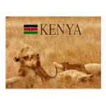 Lion and cub, Tsavo, Kenya Post Card