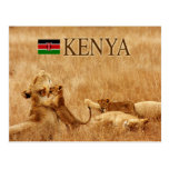 Lion and cub, Tsavo, Kenya Postcard