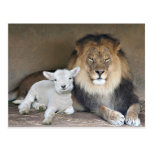 Lion and Lamb Post Cards