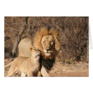 Lion and Lion Cub Card