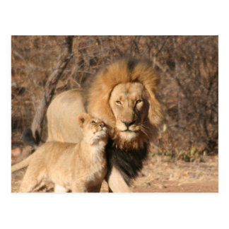 Lion and Lion Cub Postcard