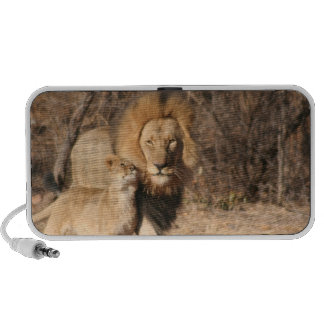 Lion and Lion Cub Speakers