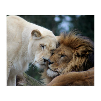 Lion and Lioness Acrylic Wall Art