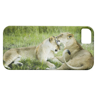 Lion and lioness, Africa 2 iPhone 5 Cover